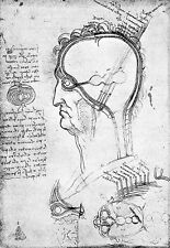 Leonardo Da Vinci Cranial Nerves  Anatomy Poster Print Art