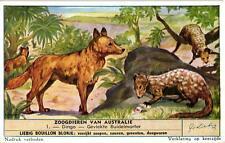 6 Cards c1955 Australian Mammals Dingo Marsupial Marter Tasmanian Devil Echidna