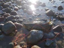 3 shrimp flies for salmon,bonefish,bass,sea trout,pollock,steelheads(size 6)