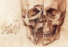 Sectioned Skull Poster by Leonardo Da Vinci, Science & Anatomy