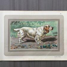 Clumber spaniel -Les chiens de chasse - jachthonden