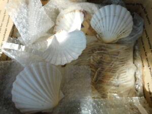 "SCALLOP CLAM SEA SHELLS 4"" baking, appetizer, decor LOT of 30 OCEAN NAUTICAL EXC"