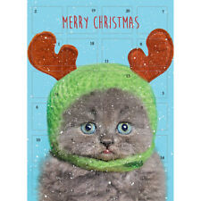 Advent Calendar Sir Louis Cat In Hat - Traditional Glitter Finish