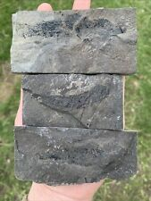 More details for fossil fish osteolepis panderi devonian old red sandstone. caithness scotland