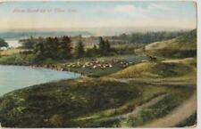 Horse Round-up on Elbow River Alberta -Prelinen 1910 Good Private Postcard