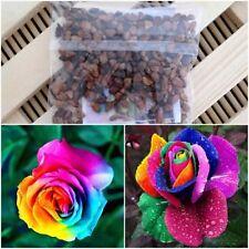 100 seeds Beautiful Rainbow Roses Home Garden Flowers Perennial Flowers Plants