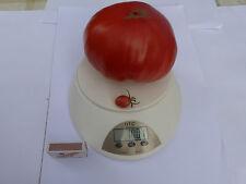 Rot  Fleischtomaten  Tomaten Samen 10 + Stück Saatgut