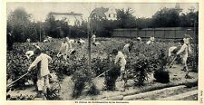 Zöglinge bei der Gartenarbeit (Haus Kinderschutz Zehlendorf) c.1906