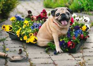Avanti funny greeting card mom mother's day dog puppy