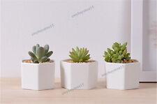 3x Hexagon White Ceramic Succulent Planter Miniature Flower Pots Office Decor