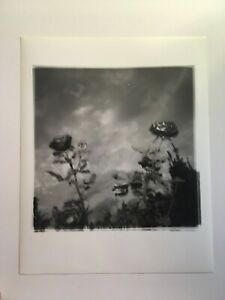 FREE SHIPPING! 3 ART PHOTOS 8x10s eatheral/abstract B&W flowers by DAVID RASMUS