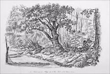 JAPON - FORÊT sur la PLAGE de l'ILE PEEL (ARCHIPEL d'OGASAWARA) - Gravure du 19e