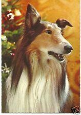 Original Vintage 1970s Large German PC- Dog- Collie- Alert- Christmas Tree