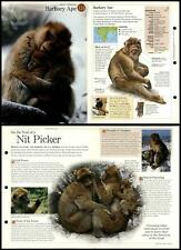 Barbary Ape #124 Mammals - Discovering Wildlife Fact File Fold-Out Card