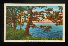 1940s Trees Along Shore Greetings Forest City PA Susquehanna Co Postcard
