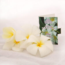 A Plumeria Fragrance Leelawadee Thai Flowers Odor Women Perfume Sample Size Pack