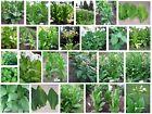 Tabak Samen Mega-pack 30 unterschiedliche Sorten