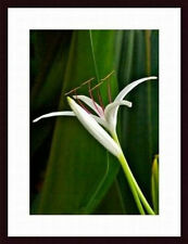 Printfinders Giant Lily by John K. Nakata Wood Framed Art Print