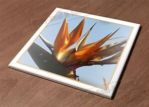 Kitchen Trivet Holder Ceramic Tile HotPlate Iplanta bird paradise exotic tropica