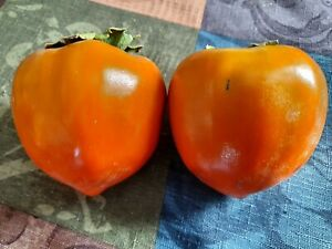 Fresh Hachiya Persimmon Whole Fruit 5 lbs.