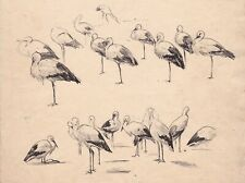 ATTRIB HENRY STACY MARKS 1829-1898 SHEET FINE PEN AND INK STUDIES CRANES EGRETS
