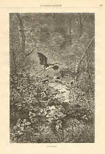 Karl Bodmer, Heron, A King Of Game, Birds, Vintage 1878 French Antique Art Print