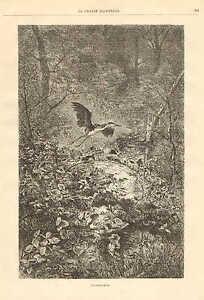 Karl Bodmer, Heron, A King Of Game, Birds, Vintage 1878 French Antique Art Print