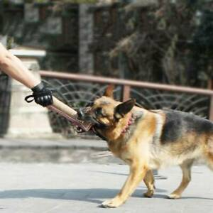 Dog Tug Toy Bite Pillow Strong Pull Training With 2 Rope Interactive Toys JI