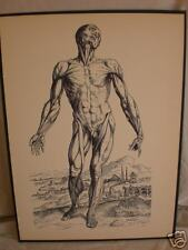 vintage MEDICAL PRINT male human ANATOMY muscle TISSUE
