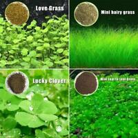 Plant Seeds Fish Tank Aquarium Aquatic Water Grass Garden Foreground Plant Decor