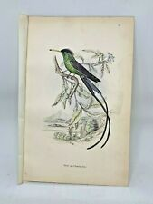 DELUXE ED Hand-colored Plates 1840 Jardine History Hummingbirds #21 Black Capped