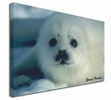 """Snow Seal 'Yours Forever' 30""""x20"""" Wall Art Canvas, Extra Large Pic, AF-S14-C3020"""