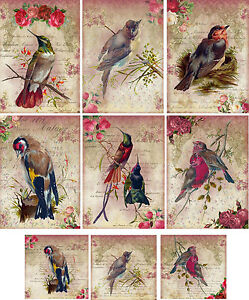 Vintage inspired bird with mini cards tag blank small set 6 with envelopes