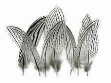 """10 Pieces - 4-6"""" Natural Silver Tail Pheasant Feathers Fly Tying Craft Smudging"""