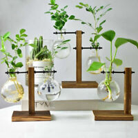 Bulb Glass Hydroponic Vase Home Office Decor Flower Plant Pot with Wooden Tray T