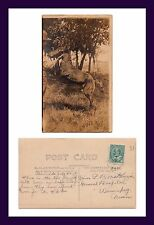 CANADA BURNSIDE REAL PHOTO TWO LEGGED COLT 1907 TO MISS L.B. McKENZIE, WINNIPEEG
