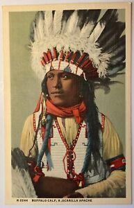 Fred Harvey Buffalo Calf A Jicarilla Apache Native Americana Postcard