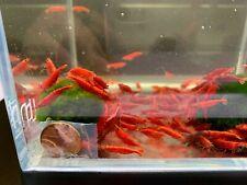 6 Blood Mary Shrimp