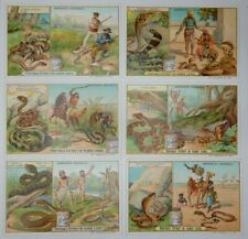 """Liebig Trade Cards - """"Serpents"""" - Full Set of 6 - French/Belgium - S0748 - GC"""