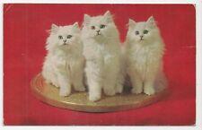 J Salmon Postcard, 6-15-61-62, Three White Cats/Kittens