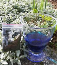 sachet de 5 g de Bleu de méthylène, aquariophilie , fongicides, poisson soignés