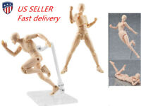 PVC Female Action Figma Archetype Figure Body Toy For Cartoon Drawing