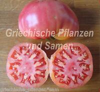 🔥 🍅 schlesische Himbeere Tomate Tomaten alte historische Sorte 10 Samen