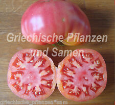 schlesische Himbeere Tomate*Tomaten*alte Sorte*10 Samen