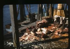 1941 red border Kodachrome Photo slide cutting fish on fishing ship
