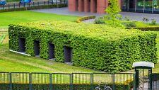 25 Stück Liguster Größe 120-150 cm als Hecke Heckenpflanze Wurzelware kaufen
