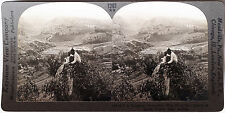 Keystone Stereoview the Island of Java, DUTCH EAST INDIES from 1930's T400 Set