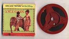 Super 8 S8 NIOK Serie NATURA Walt Disney Cinecasa 2201 OTTIMO 8mm