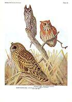 "1936 Vintage FUERTES BIRDS #56 ""SCREECH OWL, SHORT-EARED"" Color Plate Lithograph"