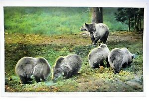 1920s POSTCARD GRIZZLY BEAR FAMILY YELLOWSTONE NATIONAL PARK
